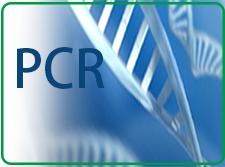 PCR试剂