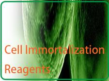永生化细胞